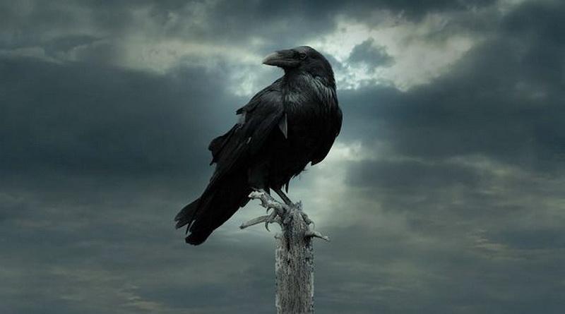 Ольга Сазонова. Что видит ворон?